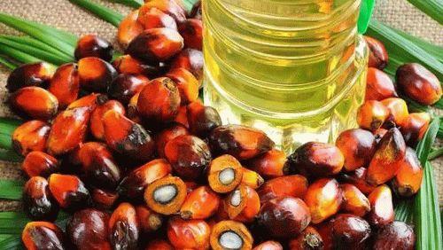 印尼投资系列 | 印尼棕榈油投资发展趋势